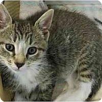 Adopt A Pet :: Billims - Secaucus, NJ