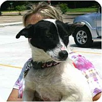 Adopt A Pet :: Abbie - Kingwood, TX