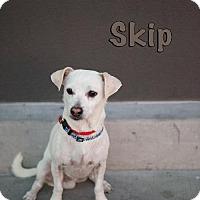 Adopt A Pet :: Skip - Las Vegas, NV