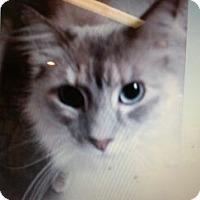 Adopt A Pet :: Peatie - Temecula, CA