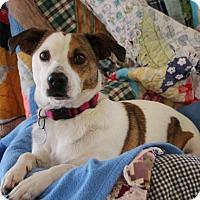 Adopt A Pet :: Althea - Knoxville, TN
