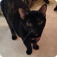 Adopt A Pet :: Pocket - Parkton, NC
