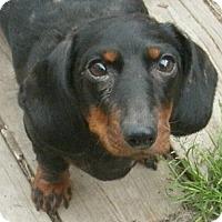 Adopt A Pet :: Loretta (Etta) - Lansing, MI