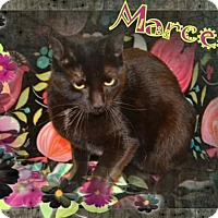 Adopt A Pet :: Marcelle - Brainardsville, NY