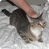 Adopt A Pet :: Melanie - Pensacola, FL