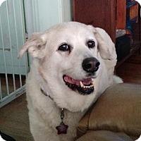 Adopt A Pet :: Roxie - Petaluma, CA