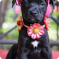 Adopt A Pet :: Ingrid - Baton Rouge, LA