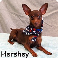 Adopt A Pet :: Hershey - Warren, PA