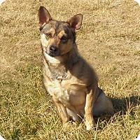 Adopt A Pet :: MINNE - New Cumberland, WV