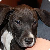 Adopt A Pet :: Kelley - Phoenix, AZ