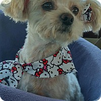 Adopt A Pet :: Zoey - San Diego, CA