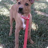 Adopt A Pet :: Liz - Waldorf, MD