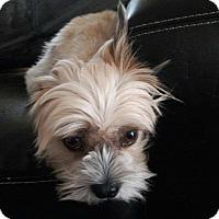 Adopt A Pet :: Myles - Las Vegas, NV