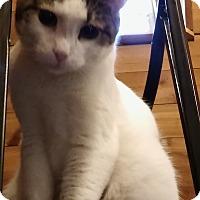 Adopt A Pet :: Ruckus - Witter, AR