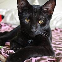 Adopt A Pet :: Fendi - Centerville, GA
