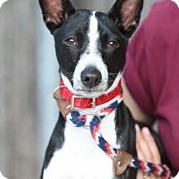 Adopt A Pet :: Zoro - Plano, TX