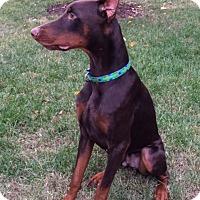 Adopt A Pet :: Dante - Arlington, VA