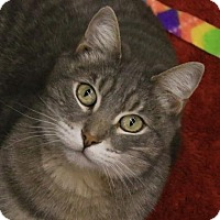 Adopt A Pet :: Misty - Morgan Hill, CA