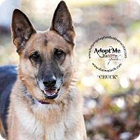 Adopt A Pet :: Chuck - Montgomery, AL
