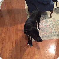 Adopt A Pet :: Buddy (COURTESY POST) - Baltimore, MD
