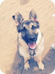 German Shepherd Dog Mix Dog for adoption in San Francisco, California - Lola