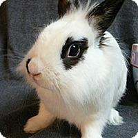 Adopt A Pet :: Linus - Newport, DE