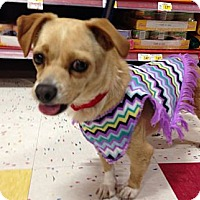 Adopt A Pet :: Lavender - Long Beach, CA