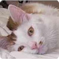 Adopt A Pet :: Calvin - Portland, OR