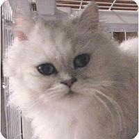 Adopt A Pet :: Serena - Davis, CA