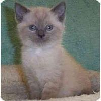 Adopt A Pet :: Uno - Reston, VA