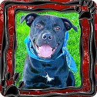 Adopt A Pet :: Teddy super family dogs - Sacramento, CA