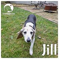 Adopt A Pet :: Jill - Novi, MI