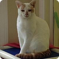Adopt A Pet :: Phil (2) - Ashland, MA