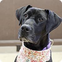 Adopt A Pet :: Tacha - Ile-Perrot, QC