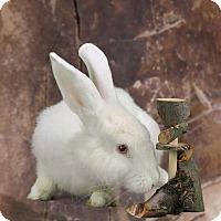 Adopt A Pet :: Augustus - Marietta, GA