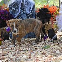 Adopt A Pet :: Lee - Charlemont, MA
