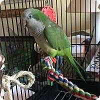 Adopt A Pet :: Polly - Tampa, FL