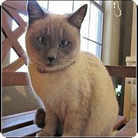 Adopt A Pet :: Lily Marie - Gilbert, AZ