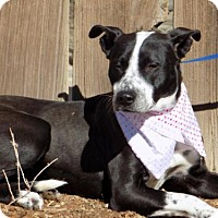 Adopt A Pet :: January - Apple Valley, CA