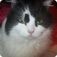 Adopt A Pet :: Bubbles - Ennis, TX