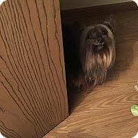 Adopt A Pet :: Charlie - Lorain, OH