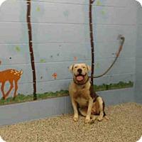 Adopt A Pet :: A493643 - San Bernardino, CA