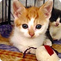 Adopt A Pet :: Chelsea - River Edge, NJ