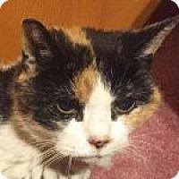 Adopt A Pet :: Polly - Medford, MA