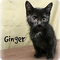 Adopt A Pet :: Ginger - Melbourne, KY