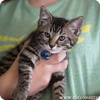 Adopt A Pet :: Jonah - Louisville, IL