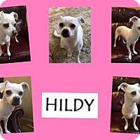 Adopt A Pet :: HILDY - Plano, TX
