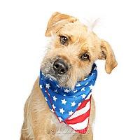 Adopt A Pet :: Snoop - Scottsdale, AZ
