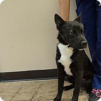 Adopt A Pet :: Sassy - Oviedo, FL