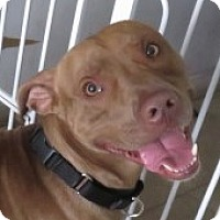Adopt A Pet :: Nicky!  Love Mush - St Petersburg, FL